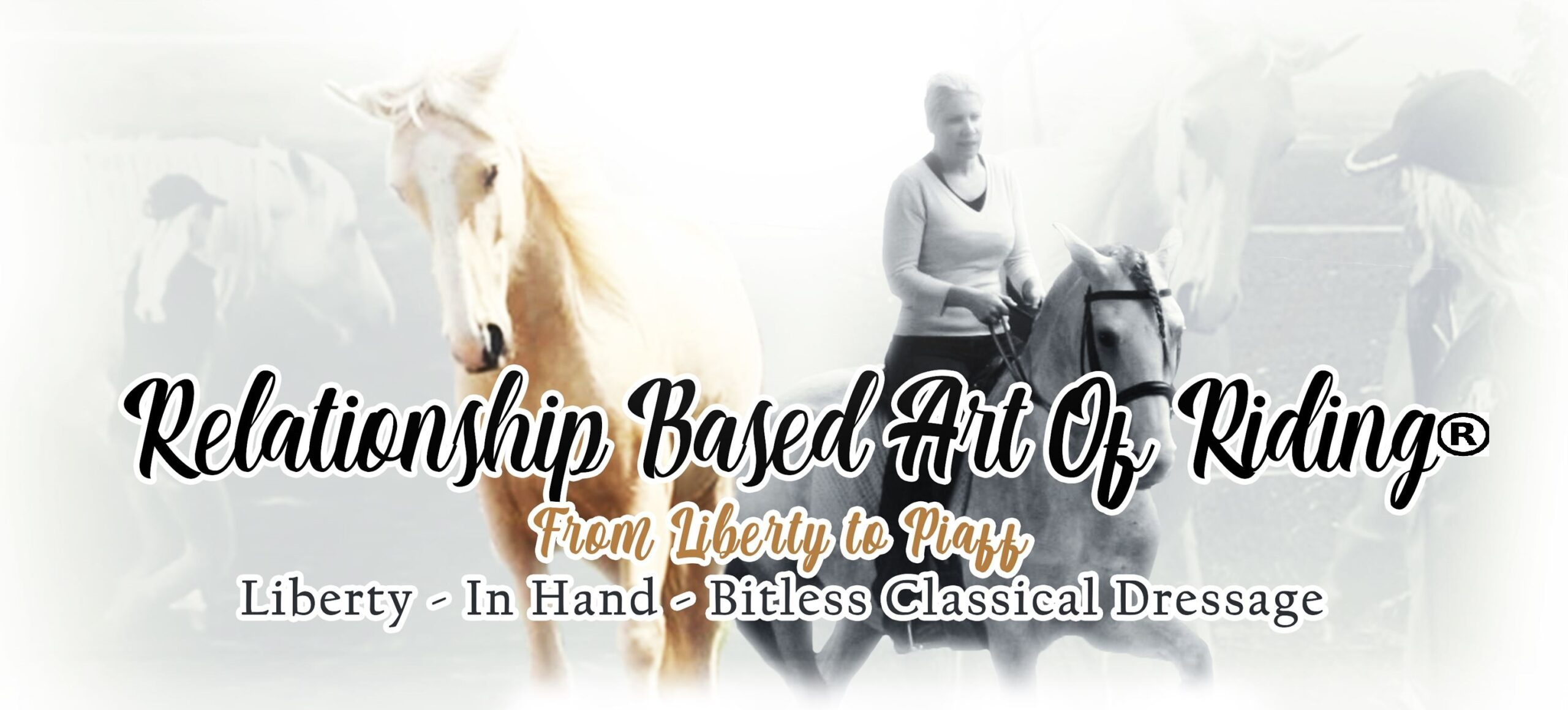Dancing With Horses Academy
